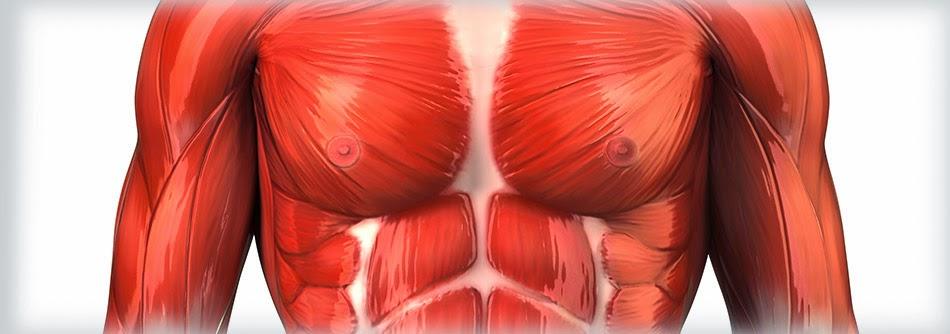 Muskel Aufmerksamkeit